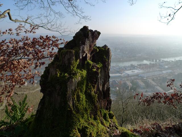 Baumstumpf vor Trierblick